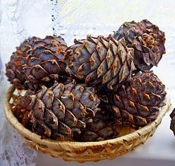 хранить кедровые орехи можно и в шишках