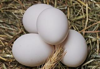 как хранить яйца свежими