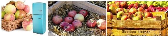 выбираем место где хранить яблоки