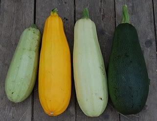 кабачки разные сорта хранятся по разному