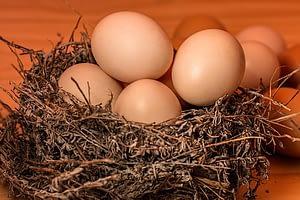 свежие яйца лучше хранить в холодильнике