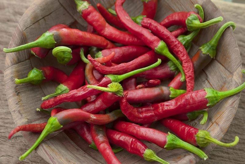Чили полезен и вкусен