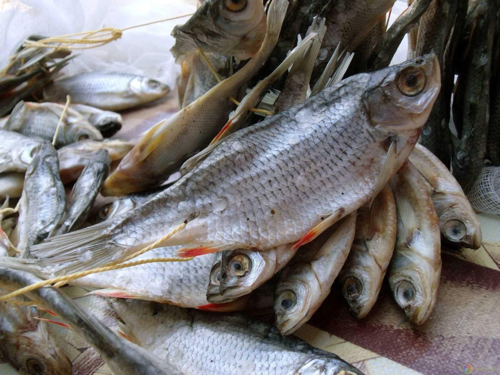 хранить вяленую рыбу можно легко в домашних условиях