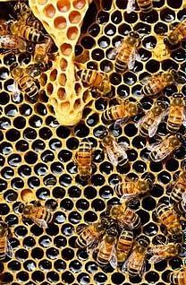 мед может быть вызревшим и наоборот